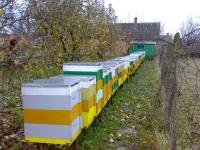 Ploiesti: Esti crescator de albine? Citeste ASTA