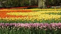 PROGNOZA METEO pe trei luni. Aprilie şi mai vin cu PLOI şi temperaturi scăzute. Cum va fi prima lună de vară