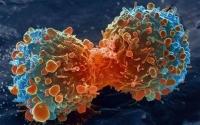 Alimentul-minune care poate preveni cancerul