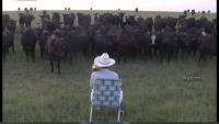 Metoda INEDITĂ a unui fermier cu ajutorul căreia îşi adună cireada cât ai clipi VIDEO
