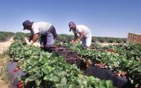 Se caută bucătari, lucrători în agricultură şi personal medical, în mai multe ţări din Europa