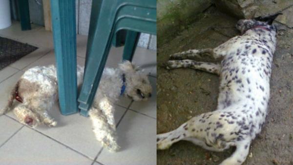O familie din Blejoi si-a gasit cainii morti, din vina vecinilor. Vezi aici ce au patit animalele