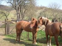 Nu e gluma. Penitenciarul Ploiesti vinde doi cai... uzati!