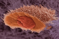 Cea mai consumată BĂUTURĂ din lume previne CANCERUL