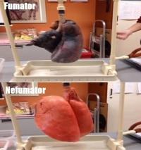Cum arată plămânii unui fumător când respiră! VIDEO ULUITOR