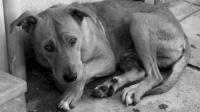 ASPA interzice adopțiile de câini fără stăpân în cazul celor care îi abandonează