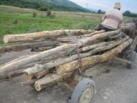 Hoţi de lemne, depistaţi de poliţiştii din Azuga