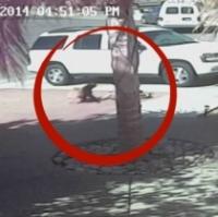 Video: Trebuie sa vezi ca sa crezi! O pisica salveaza viata unui baietel atacat de caine!
