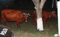 Prahova: Au fost prinsi hotii de animale! Vezi aici cate au reusit sa fure in 6 luni