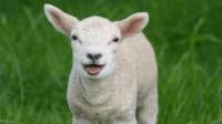 PROGNOZA METEO de Paşte şi de 1 Mai: Cum va fi vremea de Paşte 2014