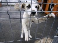 Dezbatere publica privind gestionarea cainilor cu si fara detinator din Ploiesti