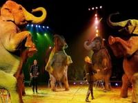 Ţestoase URIAŞE, cămile şi elefanţi la Circul Gartner din parcarea AFI Palace Ploieşti