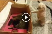 Reacția FABULOASĂ unui cățel care vede pentru prima dată o pisicuță cu puii ei!  VIDEO