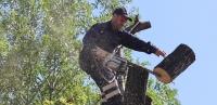 Cum se obţine avizul pentru tăieri-toaletări arbori