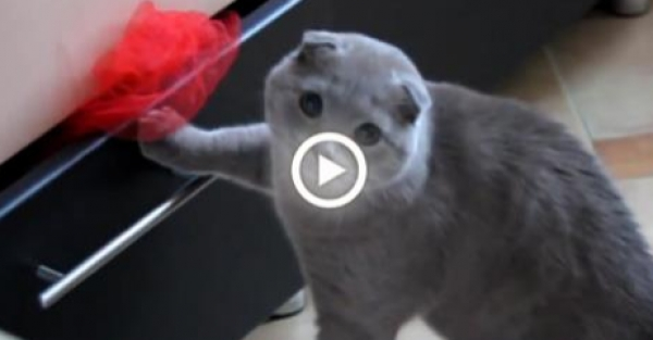 Pisica prinsă în flagrant! Râzi cu hohote la reacția ei!