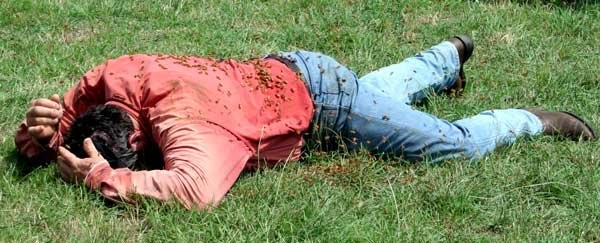 Doi cai au murit si doi barbati sunt in stare grava dupa ce au fost atacati de un roi de albine