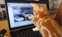 Cum reacționează o pisică atunci când se uită la un video cu ea însăși? Imaginile spun totul