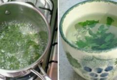 Iată cum să slăbeşti 5 kilograme de joi până sâmbătă cu ajutorul acestei plante miraculoase