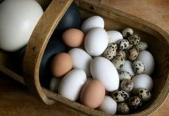 Orice femeie trebuie să ştie ASTA! Cât timp fierbi ouăle, în funcţie de tipul lor