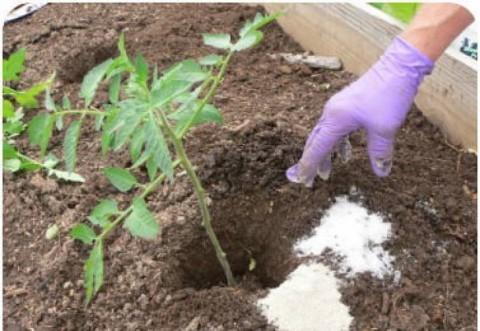 A mers în grădină și a împrăștiat sare printre plante. E trucul folosit de marile pepiniere