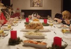 13 câini și o pisică iau masa de Crăciun împreună. O să vă însenineze ziua. VIDEO