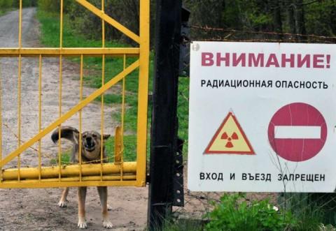 Povestea incredibilă a tinerei care a mâncat mere de la Cernobîl. Ce s-a întâmplat cu ea după aceea
