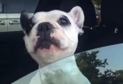 VIDEO viral amuzant - Câinele cu cea mai bună voce