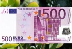 Planta care atrage banii ca un magnet. Cum arată Copacul Banului