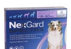 Nexgard Spectra, un medicament veterinar ce actioneaza eficient impotriva parazitilor