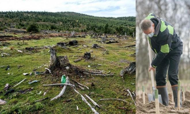 A plantat un pom la Dăbuleni tocmai prietenul celor care au tăiat pădurile