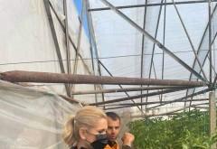 Producatorii agricoli din Prahova au nevoie de ajutor de la Guvern. Senatorul PSD Laura Moagher a mers pe teren sa afle cu ce probleme se confrunta acestia