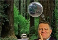 Iată dovada că Iohannis nu se va opune tăierilor pădurilor şi că serveste intereselor austriece! Klaus Iohannis a refuzat sa promulge modificarile la Codul Silvic
