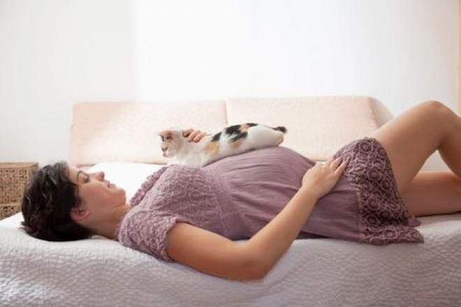 De ce nu trebuie să stea femeile însărcinate lângă pisici! Avertismentul șocant al medicilor!