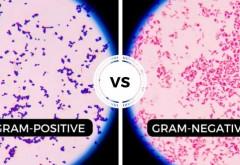 Un nou trend pe piața produselor naturiste: Cânepa Medicinală