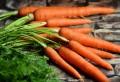 Adevărul despre morcovii care se vând în piețe