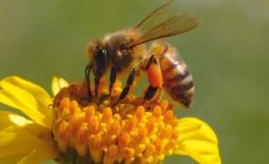 Ce produse apicole trebuie să consumăm în funcție de sezon?