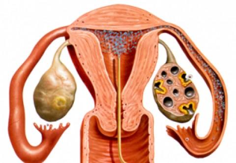 Femeile ar putea beneficia gratuit şi de a doua inseminare artificială. Femeile necăsătorite, eligibile