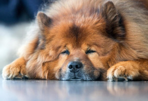 Ce spun medicii - Cât de bine e să dormi cu câinele în pat?