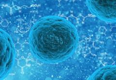 O nouă descoperire medicală ar putea explica răspândirea cancerului