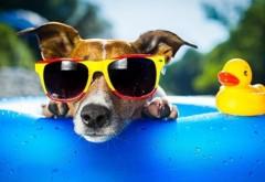 Cum rezolvi 8 probleme estivale de care se loveşte toată lumea