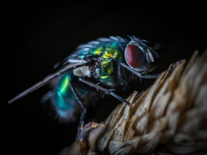 Ce se întâmplă atunci când o muscă se așază pe mâncarea ta? Trebuie să citești asta
