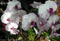 O tânără austriacă a reuşit să scape din casa unui criminal după ce i-a lăudat orhideele