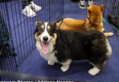 Mister în Norvegia - O boală necunoscută face prăpăd în rândul câinilor