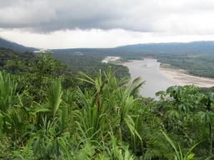 Cum arăta pădurea amazoniană în urmă cu 150 de ani. Fotografii rare, scoase la licitație