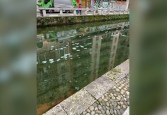 Mii de bancnote de 100 de euro au început să plutească pe un canal din Milano