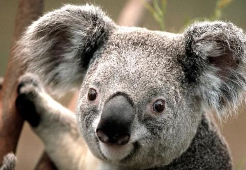 Bucurie pura: cum au reactionat animalele din Australia cand a inceput sa ploua: VIDEO