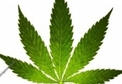 Surpriză în SUA: americanii au votat masiv pentru legalizarea marijuanei. Ar putea deveni legală în Washington