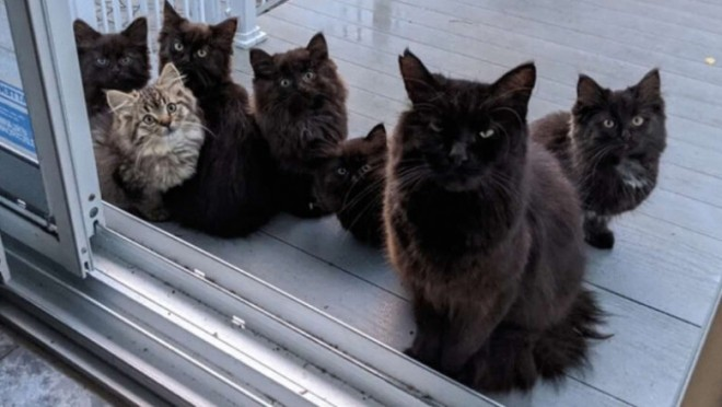 O pisică vagaboandă îi prezintă pe cei șase pui ai ei femeii care a ajutat-o cu mâncare. Povestea lui Usagi a devenit virală