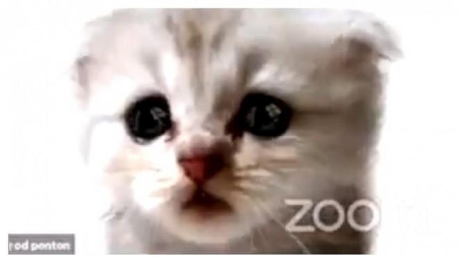 """""""Nu sunt o pisică""""/Un avocat din Texas n-a reușit să scoată filtrul de Zoom într-o audiere online în fața unui judecător"""