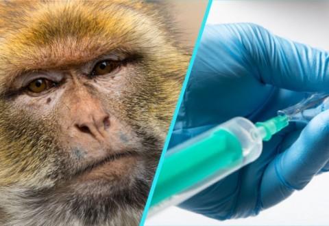 Şi animalele se vaccinează anti-Covid! Primii pacienţi: maimuţele!